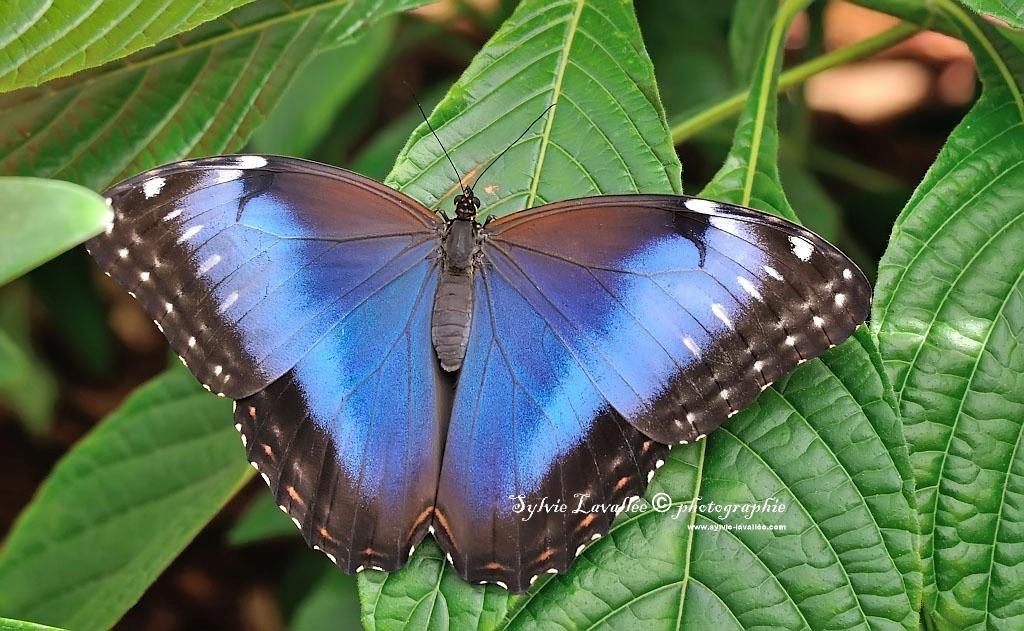 Papillons en liberté (J.B.) 2014 Dsc_3491-2-1024-s