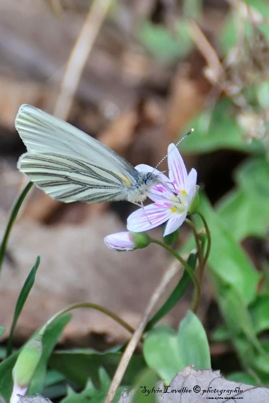 Petit papillon Dsc_4415-2-800-s