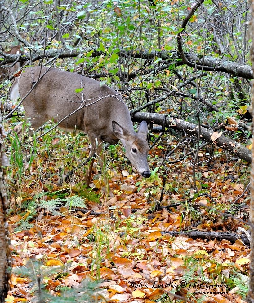Au Parc de la Jacques Cartier Dsc_5220-2-1024-s